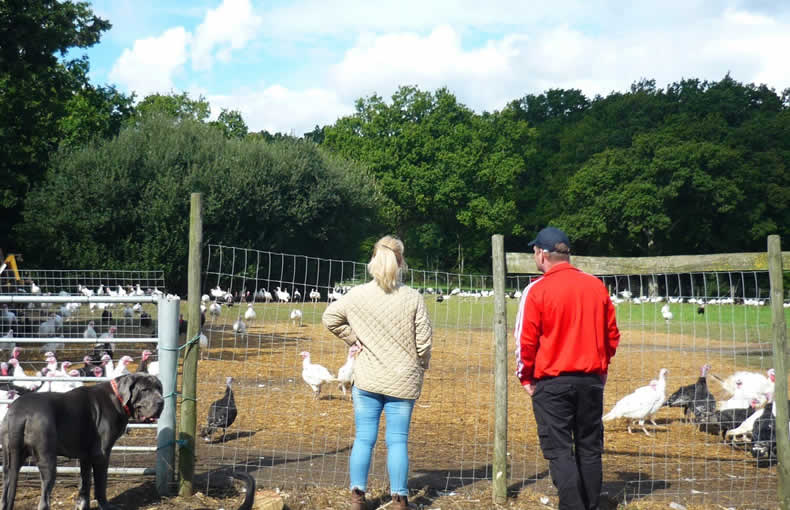 John Howe Free Range Turkeys September Visit